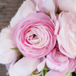ranunculus meaning santorini wedding flower
