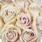 beige rose flower meaning