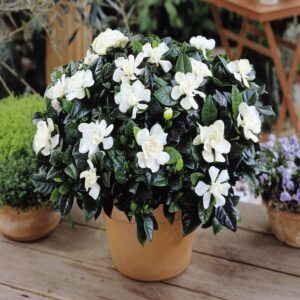 gardenia santorini wedding flowers