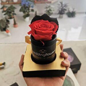 Small forever rose